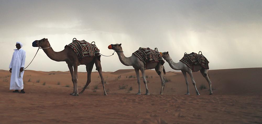 Beduine mit drei Kamelen